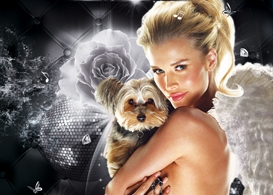 yorkie rescue of america celebrity charity event