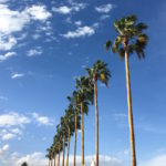 Coachella Weekend 2 – Don't Miss List